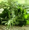 herbal-web.jpg